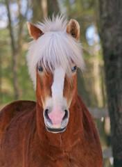 Halfinger Horse Hair Do