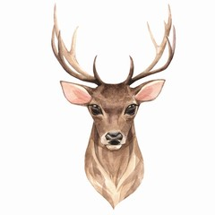 Noble deer. Watercolor illustration 1