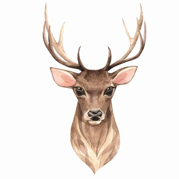 Noble deer. Watercolor illustration 1