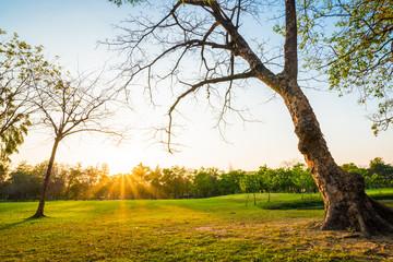 Landscape of central green park summer scene
