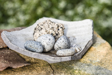 Stones and shell, green bokeh, soft background. Stones of different shapes and sizes arranged on rock.