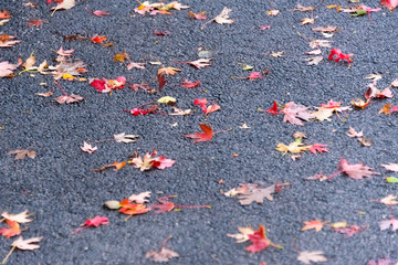 Beautiful red and yellow leaves on an asphalt