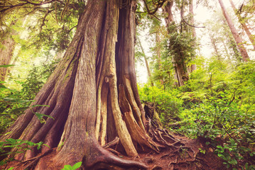 Vancouver forest Fototapete