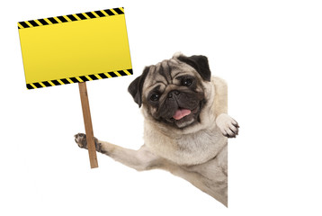 smiling pug puppy dog holding up blank rectangular  yellow warning sign, isolated on white background
