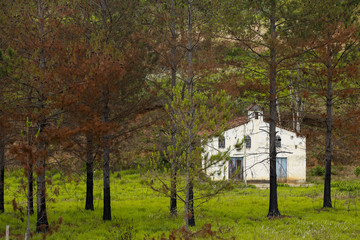 Small white farm chapel flanked by pine trees and green grass