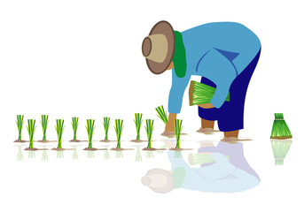 farmer transplant rice seeding vector design