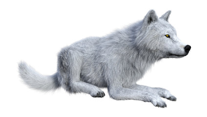 3D Rendering Arctic Wolf on White