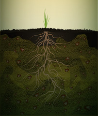 strong root in soil, small green plant with long root, strong root idea,