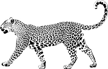 Leopard in black interpretation 2