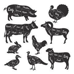 Illustrations for butcher shop. Cutting lines of different parts of domestic animals