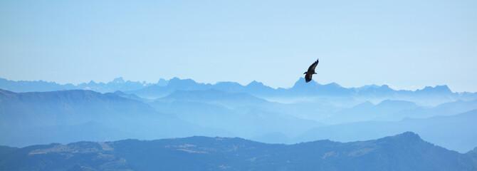 Foto auf AluDibond Adler Eagle mountain