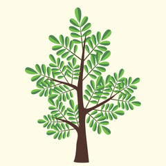 Vector Illustration of acacia tree with two color leaves on light yellow background.