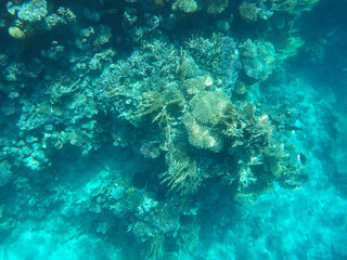 Undersea world. Corals of the Red Sea. Egypt