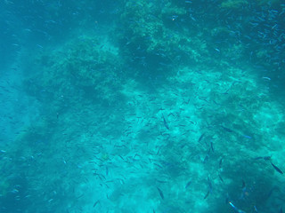 Undersea world. A large number of fish on the bottom of the Red Sea in Egypt