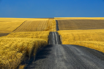 Printed kitchen splashbacks Honey Gravel Road through Golden Wheat Fields in Eastern Washington