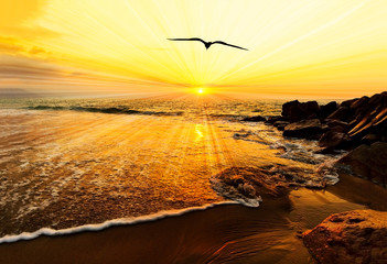 Wall Mural - Sunset Ocean Bird Silhouette