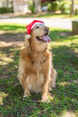 Cachorro Natalino