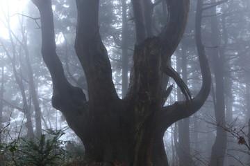 霧が立ち込める森 山形県戸沢村「幻想の森(Fantasy forest)」 Tozawamura, Yamagata, Japan