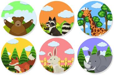 Wild animals on round badges