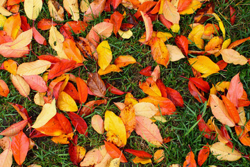 Autumn leaves - colorful nature