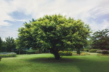 Single tree in the green field