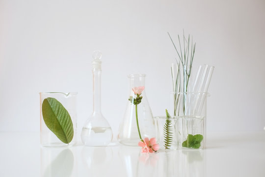 laboratory experiment and research with leaf, oil and ingredien
