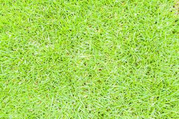 pelouse verte