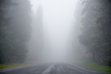 Foggy road through a thick forest Fototapete