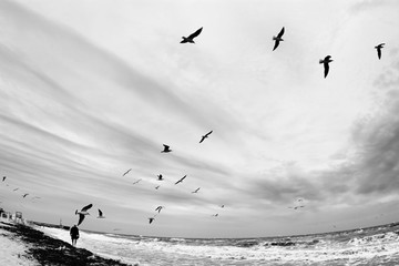 Autumn seascape in black and white. Man walks on sandy beach in stormy weather. Flock of seagulls flying under cloudy sky. Dramatic cold sea