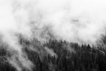 Summer mountain landscape in black and white. Forest under clouds after rain. Traveling in Carpathians, Ukraine