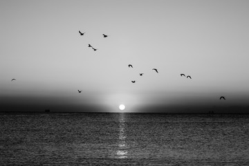 Autumn seascape at dawn in black and white. Flock of seagulls flying over sea. Silhouette of birds...