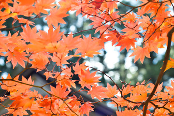 Autumn season colorful of tree and leaves