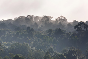 Mist Rising In The Morning over the forest, Trees,such As Wonderland Khaoyai Thailand