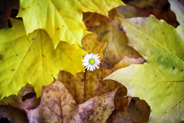 Flower and autumn leaves