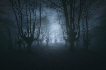 Fotobehang Bossen scary dark forest with creepy trees