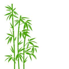 Bambus zielony