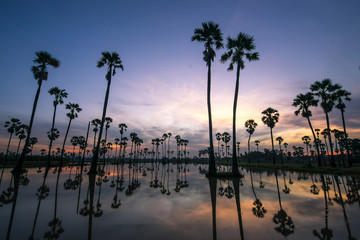 beautiful sunset reflection of silhouettes Palm tree , landscape thailand