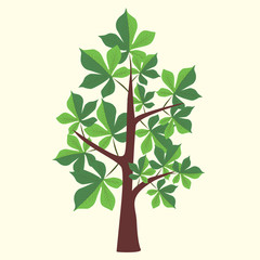 Vector Illustration of chestnut tree with two color leaves on light yellow background.