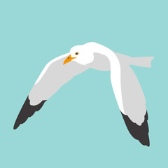 seagull bird vector illustration flat style profile