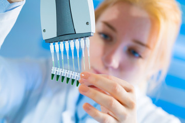 using a multi channel pipette for pcr  processing in microbiological laboratory