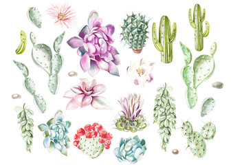 Set with watercolor cacti and succulents. Illustration