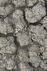 Ground parched by drought in the country