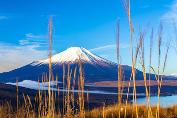 The Mt.Fuji.The foreground is pampas grass.Shot in the early morning.The shooting location is Lake Yamanakako, Yamanashi prefecture Japan.