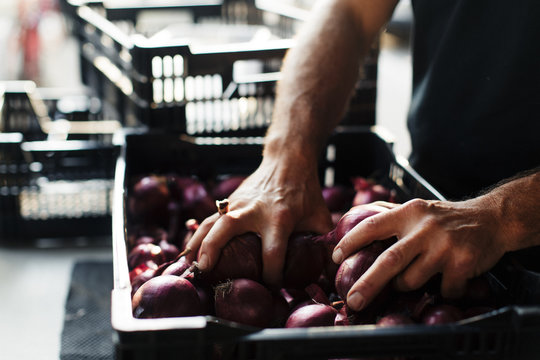 Man's hand holding onions in crate