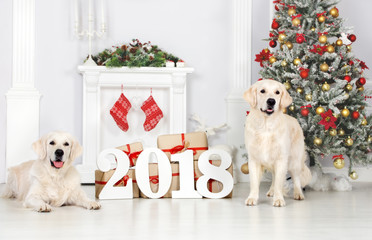 two beautiful dogs posing for New Year 2018