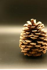 Pinecone 3