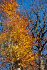 Foto op Canvas Aan het plafond Laubbaum im Herbst