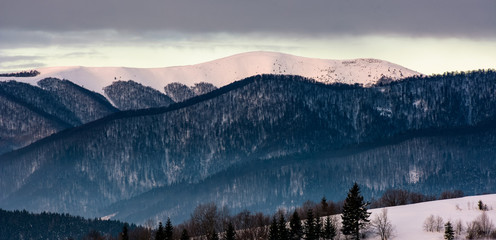 forested mountain ridge with snowy tops at dawn. beautiful nature scenery in winter