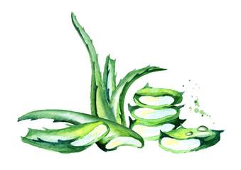 Organic Aloe vera illustration. Watercolor hand drawn composition