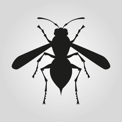 Icon of wasp silhouette on the white background.